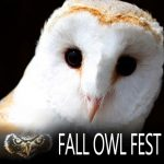 Fall Owl Fest