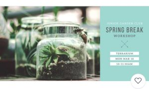 Create-Your-Own Terrarium - Junior Garden Club