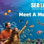 Mermaids at SEA LIFE Aquarium Orlando