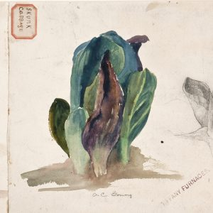"Watercolors from Louis Comfort Tiffany's ""Litt..."