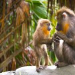 Love and Loss Across Species Lines: The Neuroscien...