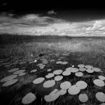 Cathedrals of Florida: Masterworks by Clyde Butcher