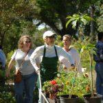 Plant Sale at Leu Gardens