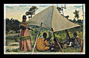 Osceola Natives Opening Reception